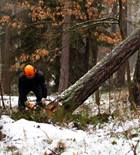 forestry-cutting-tree-tools-materials-for-engines-materion