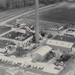 Lucky Ohio Plant